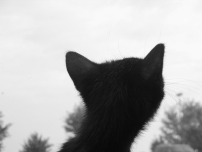 kittenwindow