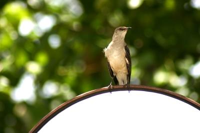 birdonmirror2