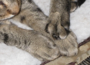 kittyfeet