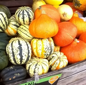 Gorgeous gourds: confirmation that fall has arrived!