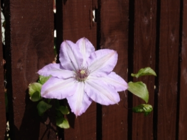 flowerfence