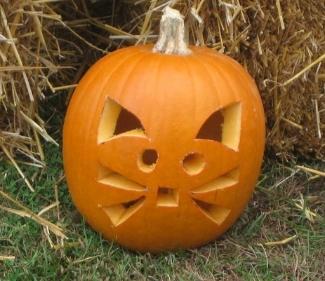 pumpkincat2