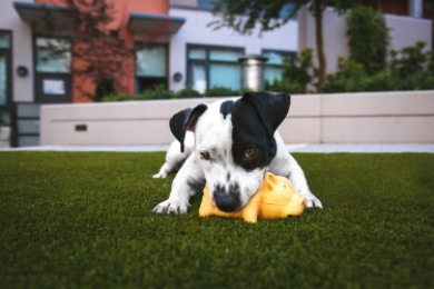 dogwithtoy